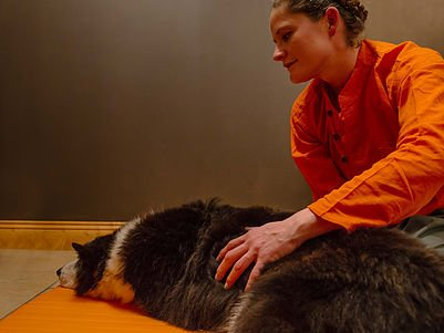 Image for 60min Animal Companion Therapy Session - 33% Off